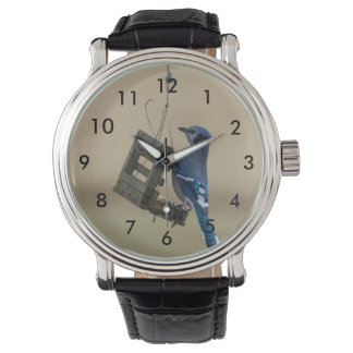 Swinging Blue Jay Watch