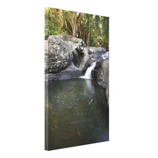 Swirling Rock Pool Cedar Creek Australia Canvas Print