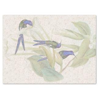 Swordtail Hummingbird Birds Floral Tissue Paper