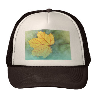 Sycamore Maple Autumn Leaf Hats