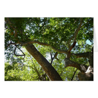 Sycamore Tree Green Nature Photography Card