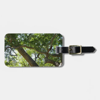 Sycamore Tree Green Nature Photography Luggage Tag