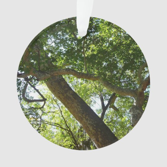 Sycamore Tree Green Nature Photography Ornament