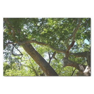 Sycamore Tree Green Nature Photography Tissue Paper