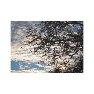 Sycamore Tree in Cloudy Sky near Sundown in Winter Canvas Print