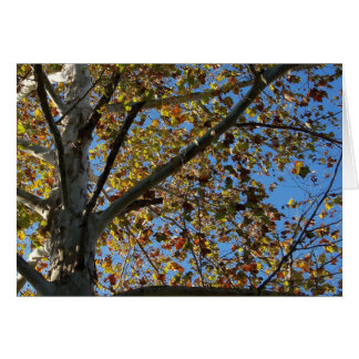 Sycamore tree in the fall against a blue sky card