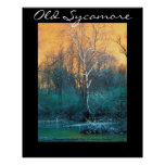 Sycamore Tree, Old Sycamore Posters