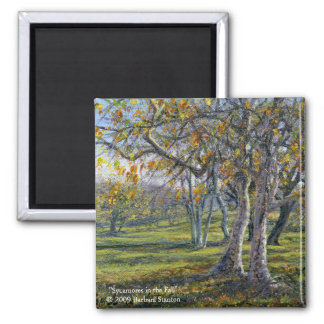 Sycamores in the Fall Magnet