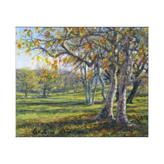 """Sycamores in the Fall"" on Gallery Wrapped Canvas Print"