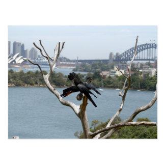 Sydney View and Black Cockatoos Postcard
