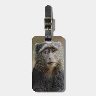 Sykes or Blue Monkey, Cercopithecus mitis, Luggage Tag