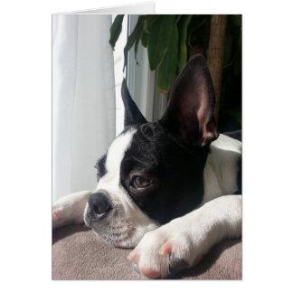 Sympathy boston terrier card
