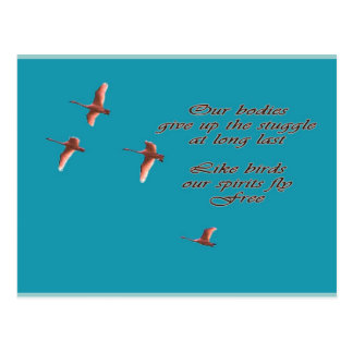 Sympathy-May You Find Comfort Trupeter Swans Postcard