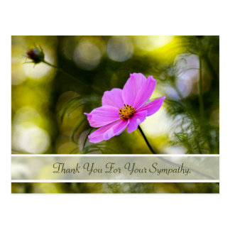 Sympathy Thank You Evening Pink Cosmos Wildflower Postcard