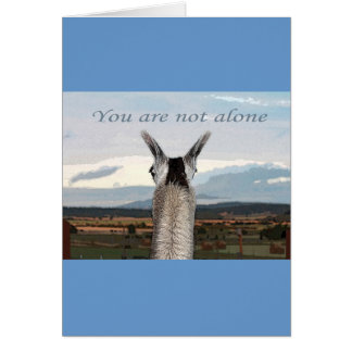 Sympathy: You Are Not Alone Llama Cards