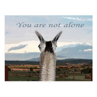 Sympathy: You Are Not Alone Llama Postcard