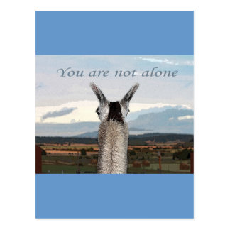 Sympathy: You Are Not Alone Llama Postcards