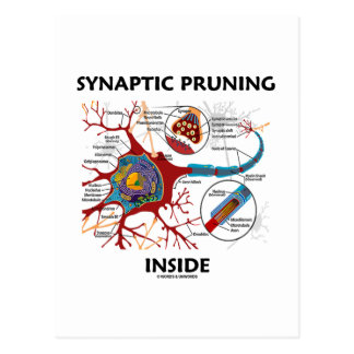 Synaptic Pruning Inside Neuron Synapse Geek Humor Postcard