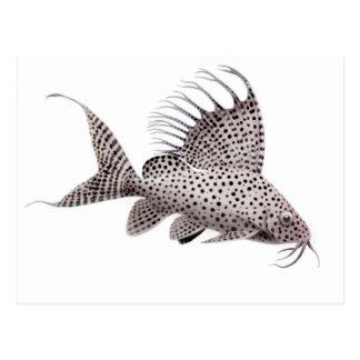 Synodontis eupterus Catfish Postcard