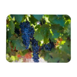 Syrah Wine Grape Magnet