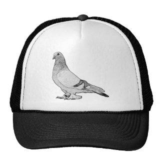 Syrian Coop Tumbler Fancy Pigeon Trucker Hat
