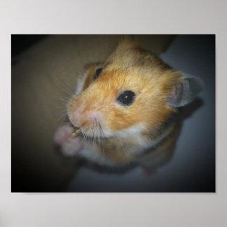 Syrian Hamster Poster