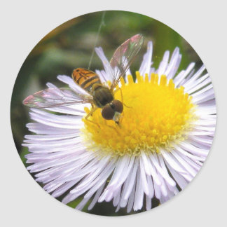 Syrphid on Wildflower Sticker