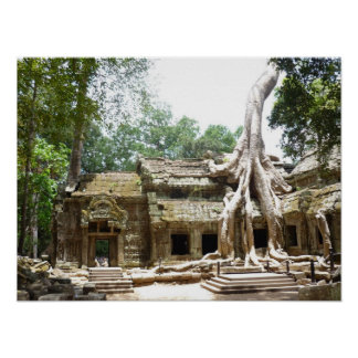 ta prohm tree poster