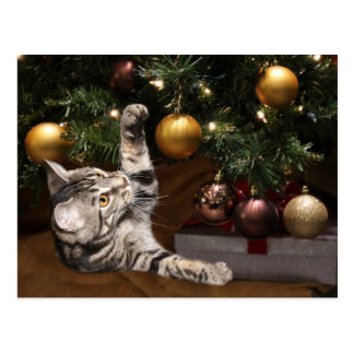 Tabby and Christmas tree Postcard