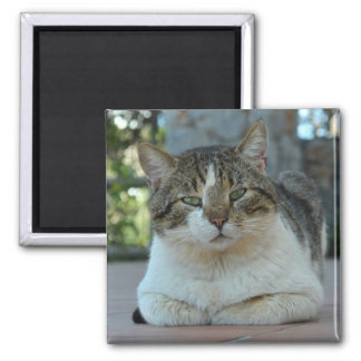 Tabby and White Cat Magnet