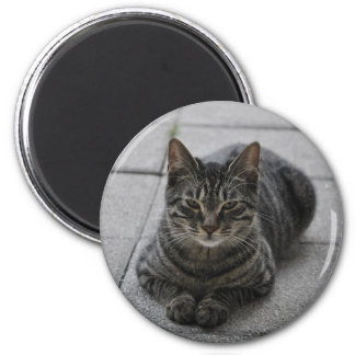 Tabby Cat 2 Inch Round Magnet