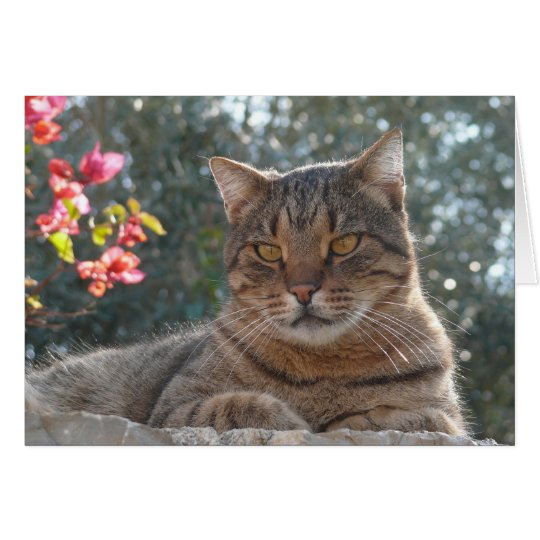 Tabby Cat Card