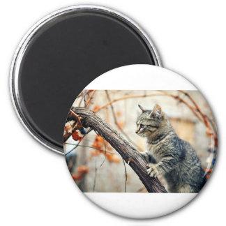 Tabby Cat Climbs Autumn Tree 2 Inch Round Magnet