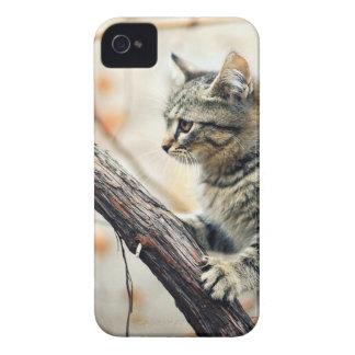 Tabby Cat Climbs Autumn Tree Case-Mate iPhone 4 Case