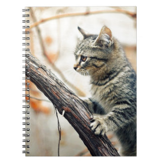 Tabby Cat Climbs Autumn Tree Notebook