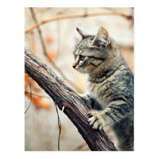 Tabby Cat Climbs Autumn Tree Postcard