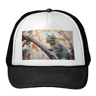 Tabby Cat Climbs Autumn Tree Trucker Hat