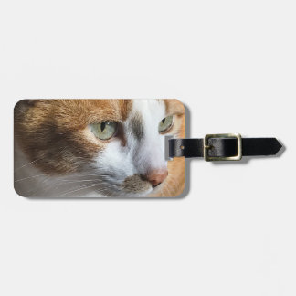 Tabby cat closeup luggage tag
