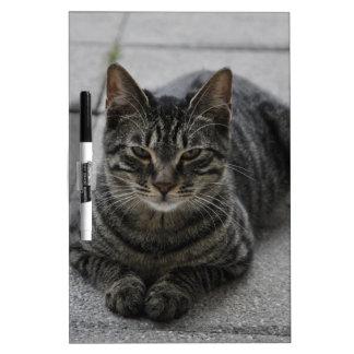 Tabby Cat Dry Erase Whiteboard