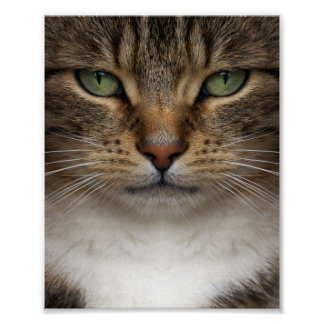 Tabby Cat Face Mini Poster