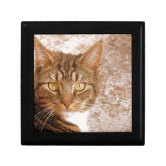 Tabby Cat Gift Box