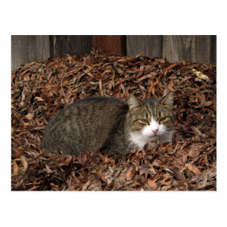 Tabby Cat in autumn Leaves Postcard