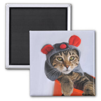 Tabby Cat In Mouse Costume Magnet