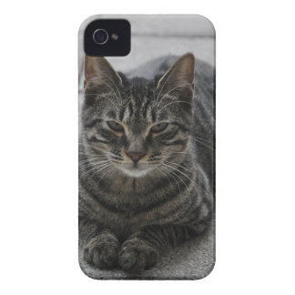 Tabby Cat iPhone 4 Covers