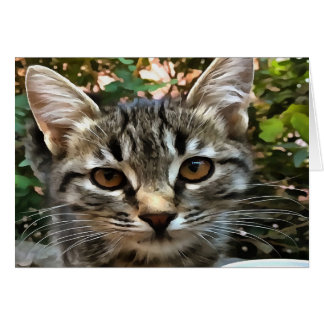 Tabby Cat Kitten Making Eye Contact Card