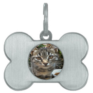 Tabby Cat Kitten Making Eye Contact Pet ID Tag