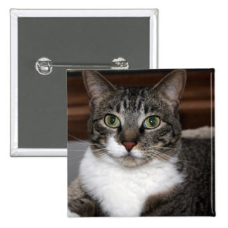 Tabby Cat Looking at You 2 Inch Square Button