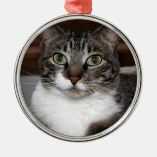 Tabby Cat Looking at You Photo Metal Ornament