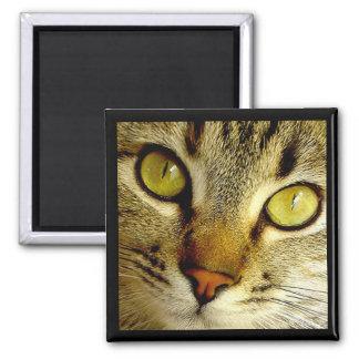 Tabby Cat - Magnet
