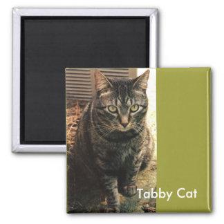 Tabby Cat Magnet retro green